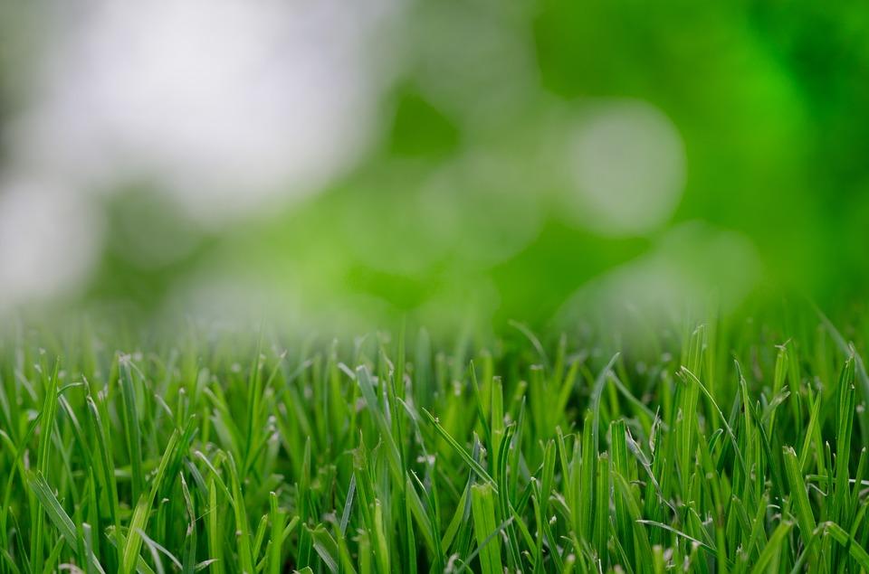 grass-821535_960_720
